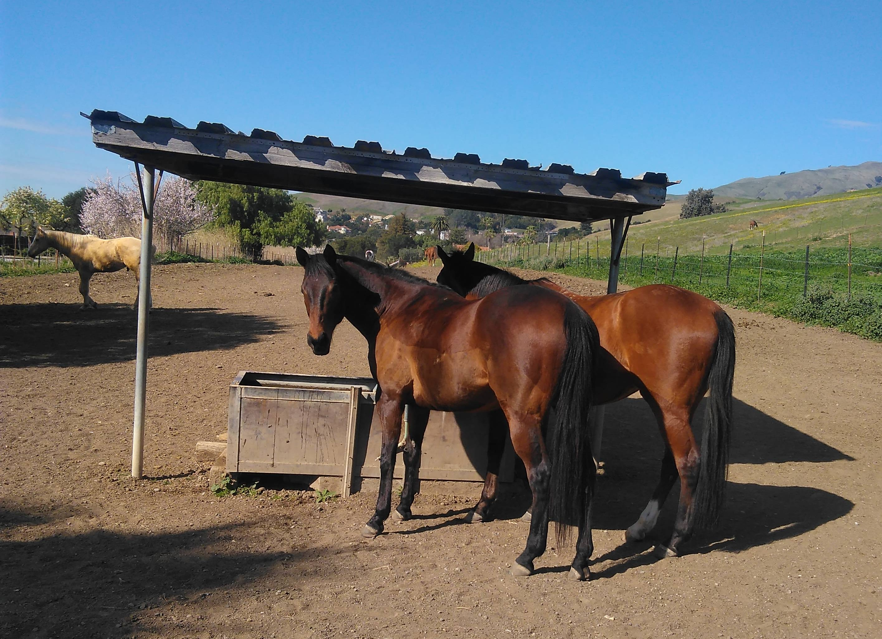 Horses in a Natural, Relaxed State