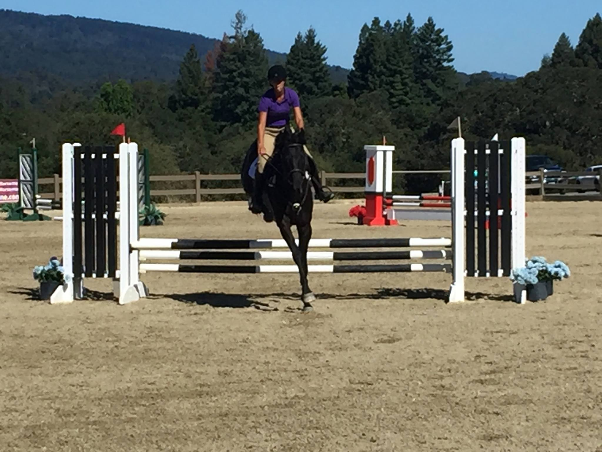 Jumping Noche at a Show